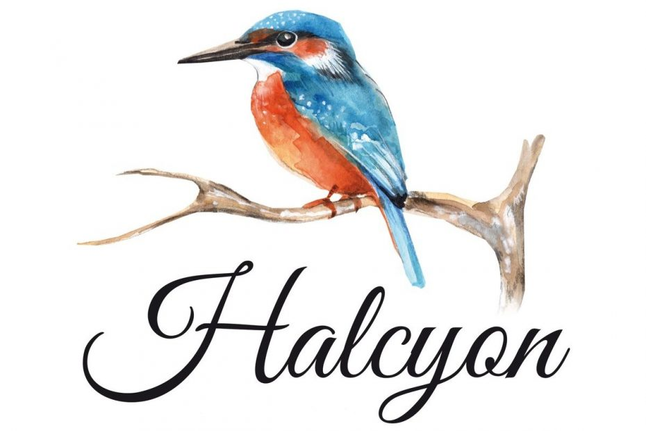 halcyon bird